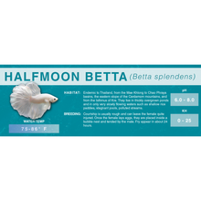Load image into Gallery viewer, Betta Fish (Betta splendens) - Standard Aquarium Label