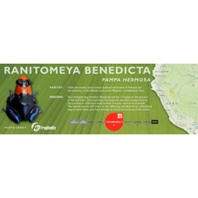 Load image into Gallery viewer, Ranitomeya benedicta - Standard Vivarium Label