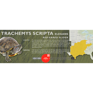 Red-Eared Slider (Trachemys scripta elegans) - Standard Vivarium Label