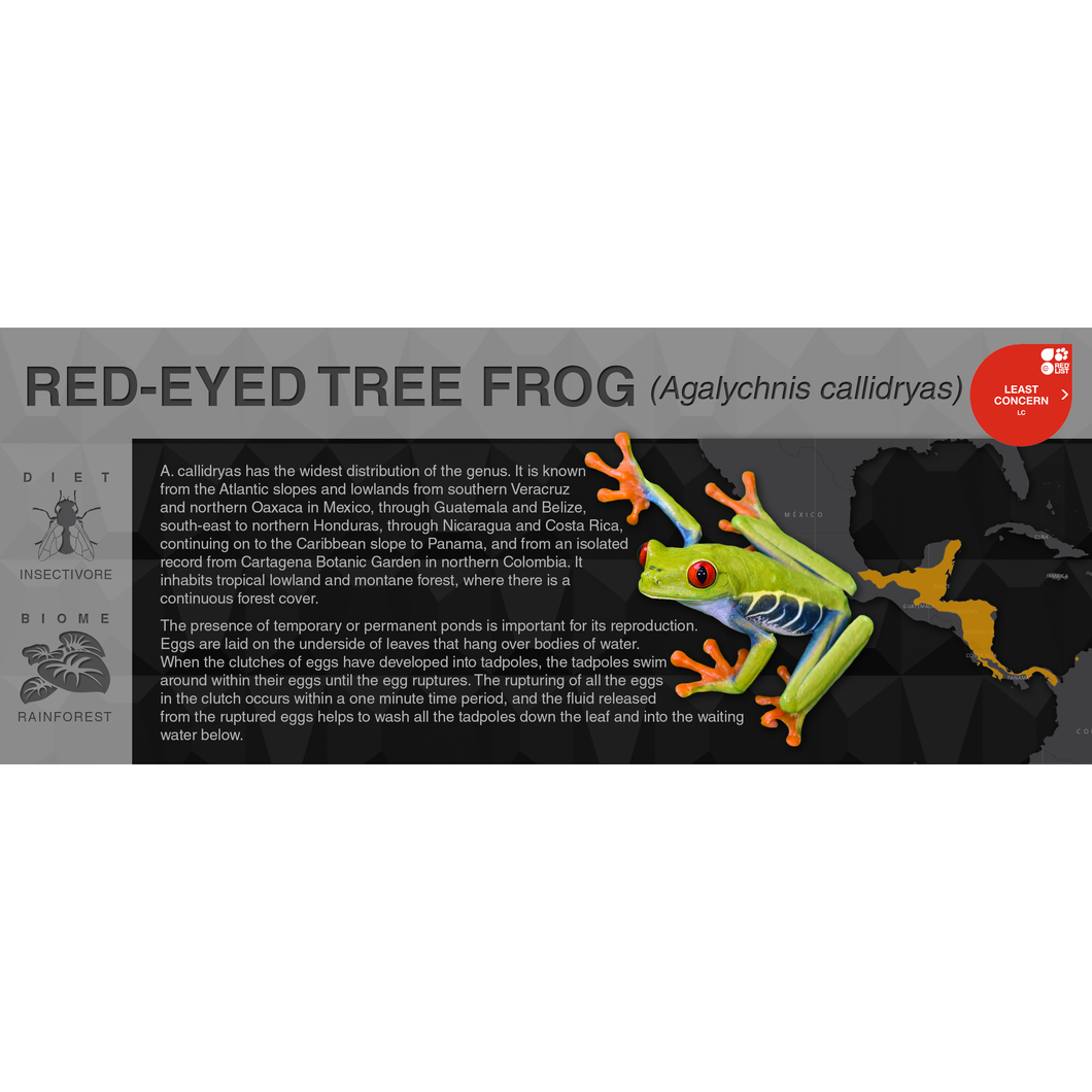 Red-Eyed Tree Frog (Agalychnis callidryas) - Black Series Vivarium Label