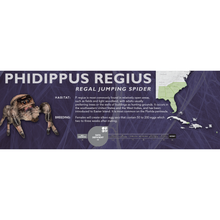 Load image into Gallery viewer, Regal Jumping Spider (Phidippus regius) - Standard Vivarium Label