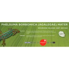Load image into Gallery viewer, Réunion Island Day Gecko (Phelsuma borbonica mater) Standard Vivarium Label