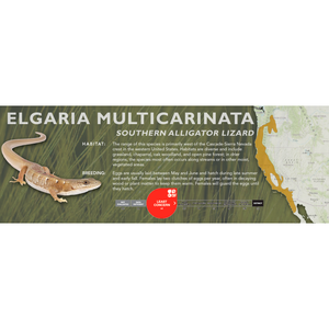 Southern Alligator Lizard (Elgaria multicarinata) Standard Vivarium Label