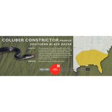 Load image into Gallery viewer, Eastern Racer (Coluber constrictor) Standard Vivarium Label