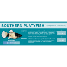 Load image into Gallery viewer, Southern Platyfish (Xiphophorus maculatus) - Standard Aquarium Label