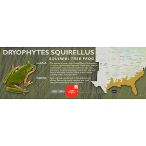 Squirrel Tree Frog (Dryophytes squirellus) - Standard Vivarium Label