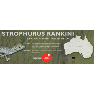 Exmouth Spiny-Tailed Gecko (Strophurus rankini) Standard Vivarium Label