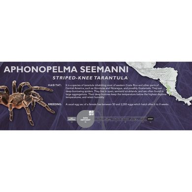 Striped-Knee Tarantula (Aphonopelma seemanni) - Standard Vivarium Label