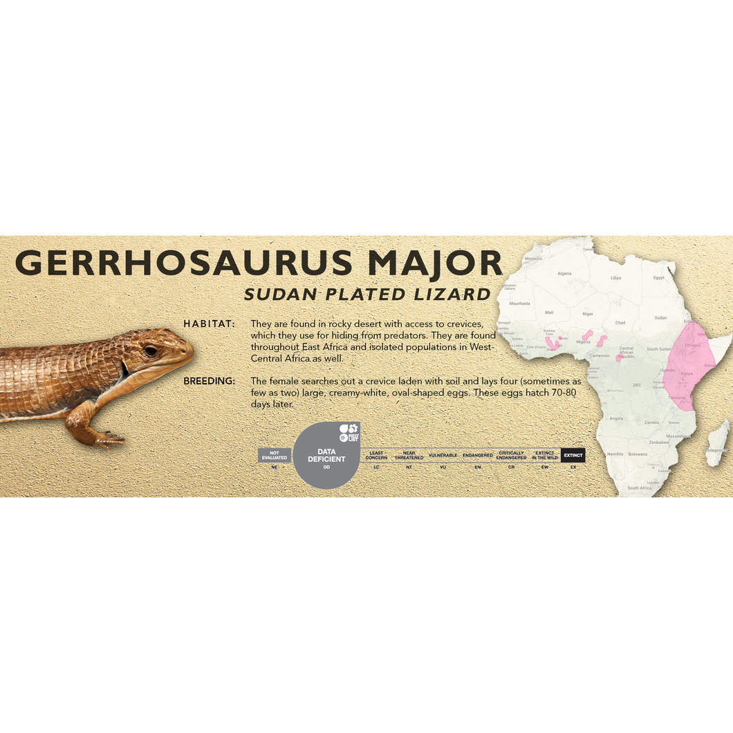 Sudan Plated Lizard (Gerrhosaurus major) Standard Vivarium Label