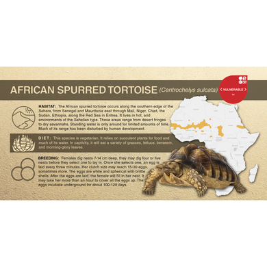African Spurred Tortoise (Centrochelys sulcata) - Aluminum Sign