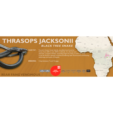 Black Tree Snake (Thrasops jacksonii) Standard Vivarium Label