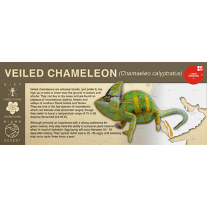 Veiled Chameleon (Chamaeleo calyptratus) - Black Series Vivarium Label