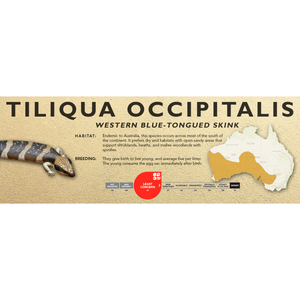 Western Blue-Tongued Skink (Tiliqua occipitalis) Standard Vivarium Label