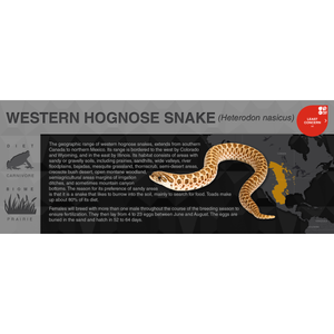 Western Hognose Snake (Heterodon nasicus) - Black Series Vivarium Label