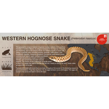 Load image into Gallery viewer, Western Hognose Snake (Heterodon nasicus) - Black Series Vivarium Label