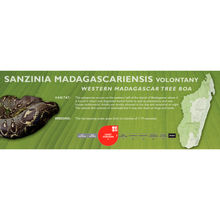 Load image into Gallery viewer, Madagascar Tree Boa (Sanzinia madagascariensis) Standard Vivarium Label