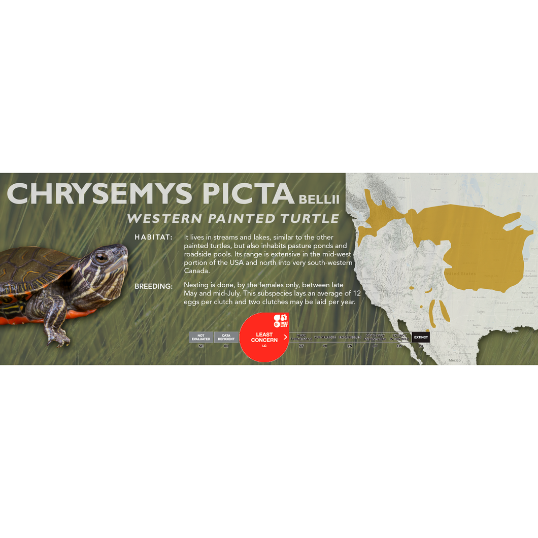 Painted Turtle (Chrysemys picta) - Standard Vivarium Label