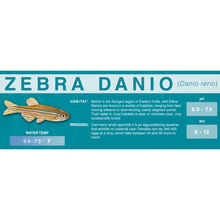 Load image into Gallery viewer, Zebra Danio (Danio rerio) - Standard Aquarium Label