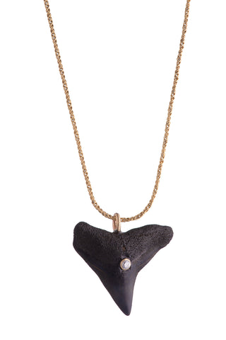 Bay Shark Tooth Necklace