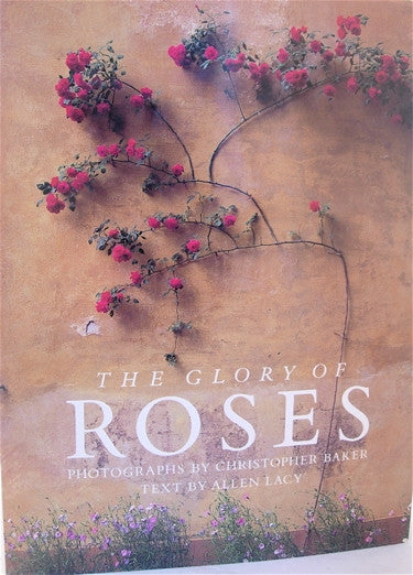 The Glory of Roses