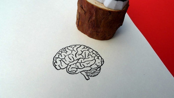 Anatomical Brain