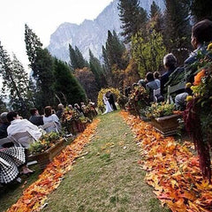 Magical Weddings