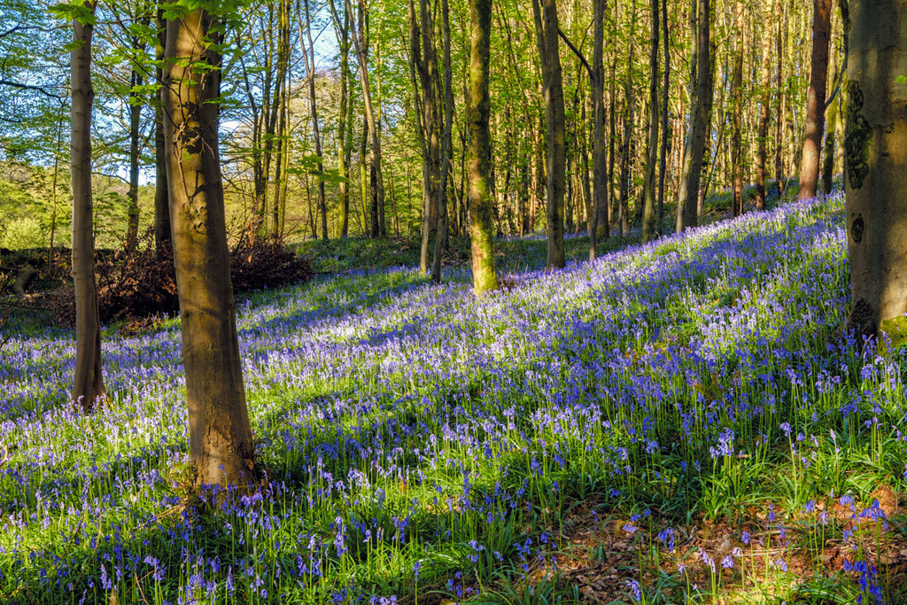 Woodland Wanders - what to see in a spring wood - NatureTree