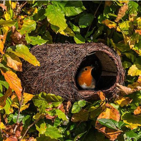Simon King Brushwood Robin Nester - NatureTree