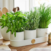 Load image into Gallery viewer, Sophie Conran Buttermilk Herb Pots - NatureTree
