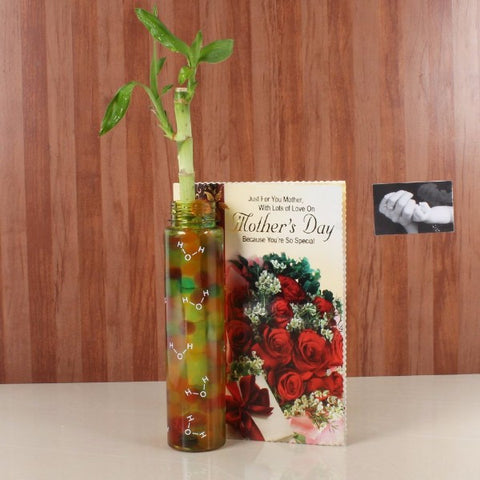 Good Luck Bamboo Plant with Mothers Day Greeting Card