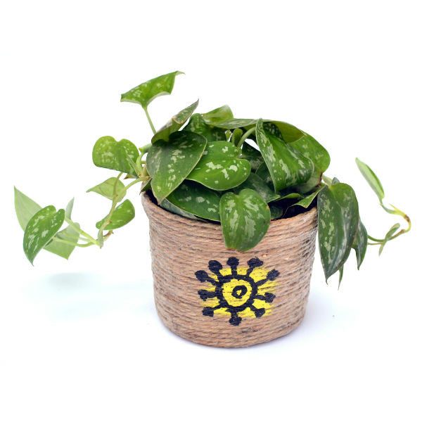 Indoor Plant Scindapsus Silver with Jute Pot - Giftingnation