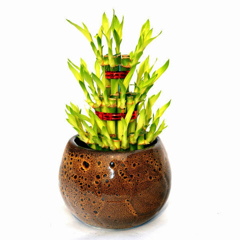 3 Layer Bamboo Plant in Brown Ceramic Pot - Giftingnation
