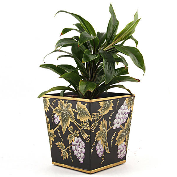 Indoor Plant Cordyline in Black Metallic Planter - Giftingnation