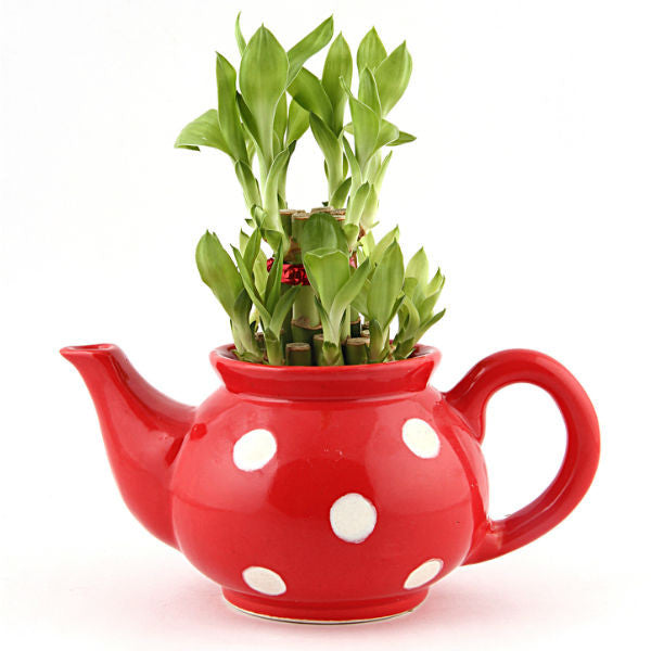 Lucky Bamboo 2 Layer in Red Polka Kettle - Giftingnation
