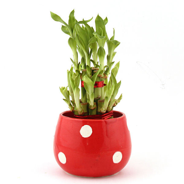 Lucky Bamboo 2 Layer Red Polka Dot Round Ceramic Pot - Giftingnation