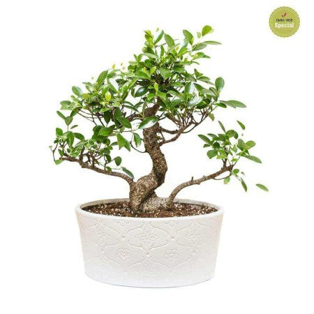 Bonsai from Nurturing Green