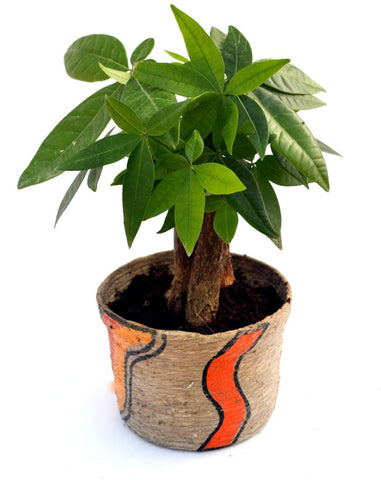 Jute 3-In-1 Money Tree Plant - Giftingnation