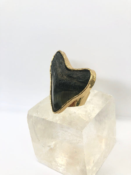 Fossilized Shark Tooth Ring