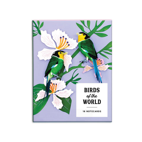 Birds of The Word Boxed Cards