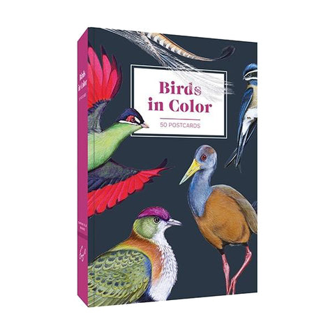 Birds in Colour Postcards