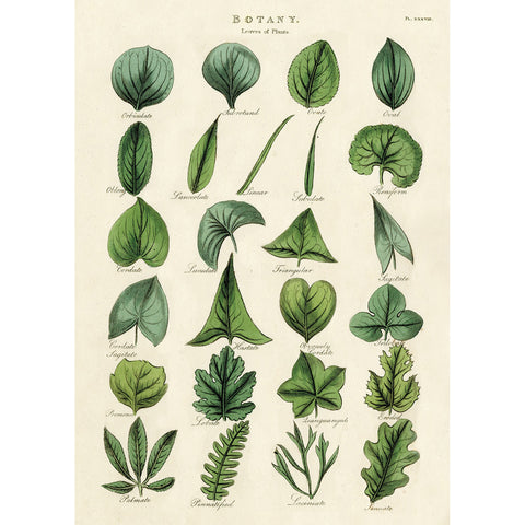 Botany Leaves Wrap