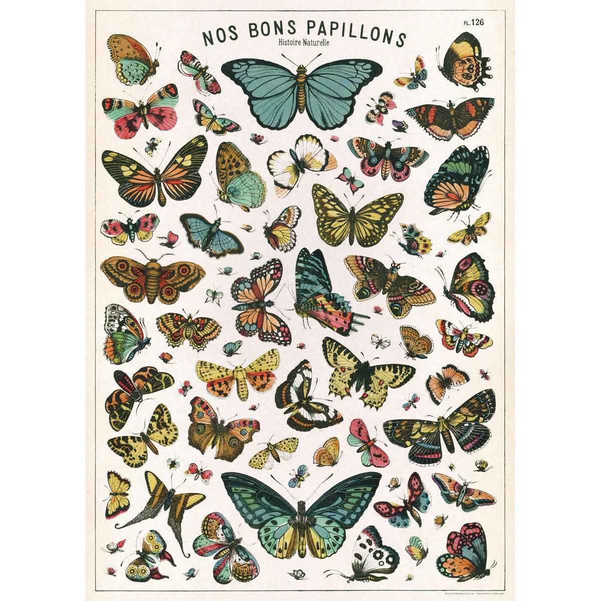 Butterfly Chart Poster Wrap