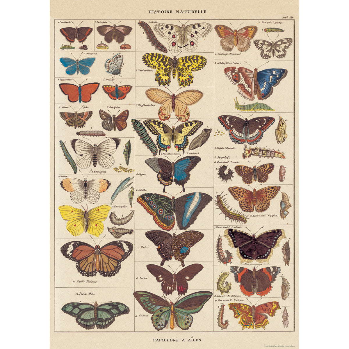 Butterfly Natural History Poster Wrap