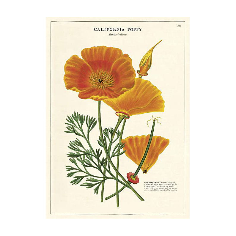 California Poppy Single Card
