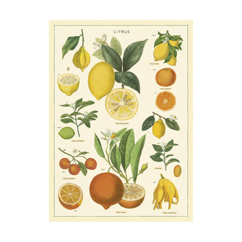 Citrus Single Card