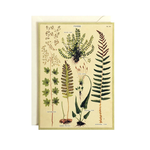 Ferns Single Card
