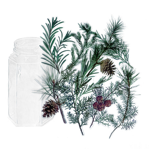 Pine Clear Sticker Set