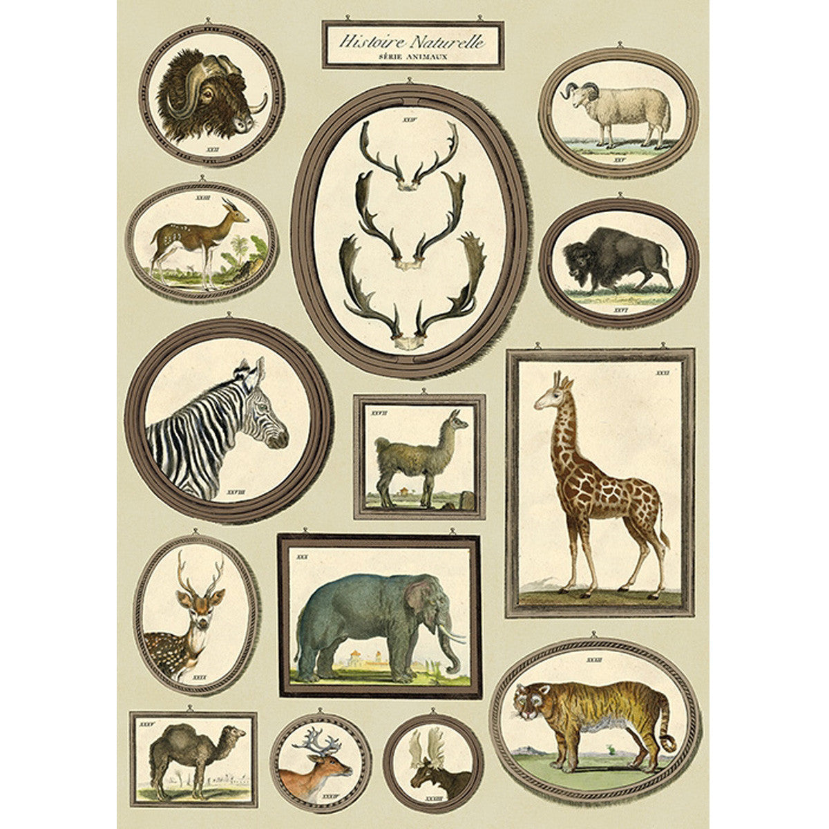 Natural History Animals Poster Wrap