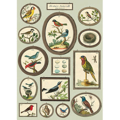 Natural History Birds No. 2 Poster Wrap