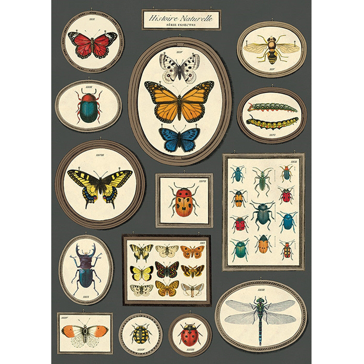 Natural History Butterflies & Insects No. 3 Poster Wrap